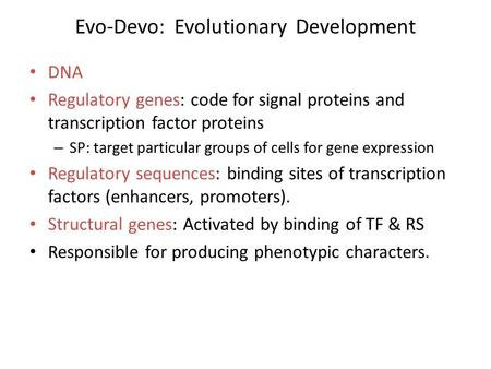 Evo-Devo: Evolutionary Development DNA Regulatory genes: code for signal proteins and transcription factor proteins – SP: target particular groups of cells.