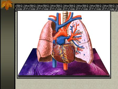 The Respiratory System Pulmonary Anatomy and Physiology Chapter 15: 393-423.