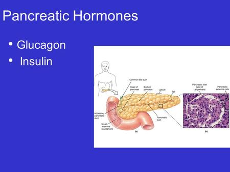 Pancreatic Hormones Glucagon Insulin.