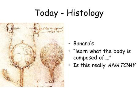"Today - Histology Banana's ""learn what the body is composed of…."" Is this really ANATOMY."