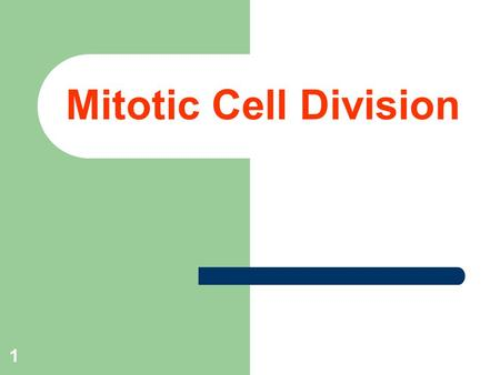 1 Mitotic Cell Division. 2 Objectives  Learn preparing and staining procedure to identify the stages of mitosis in onion root tip.  To differentiate.