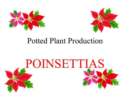 Potted Plant Production POINSETTIAS. Introduction Euphorbia pulcherrima Native to mexico #1 potted flowering crop in US Grown for showy bracts Cyathia.