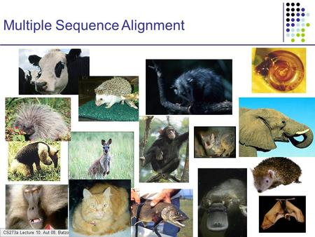 CS273a Lecture 10, Aut 08, Batzoglou Multiple Sequence Alignment.