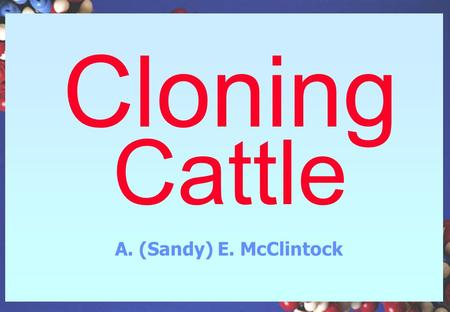 "Cloning Cattle A. (Sandy) E. McClintock Embryo Multiplication and Transfer ""Cloning"" Until recently - embryo cloning only –Many labs are involved worldwide."