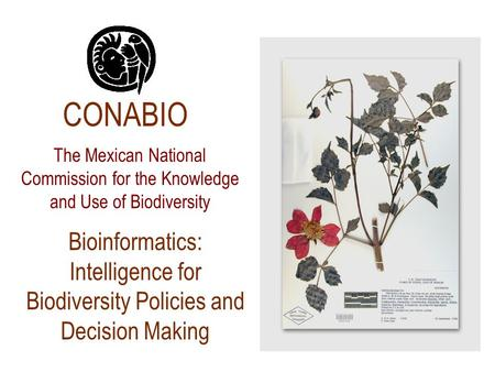 Bioinformatics: Intelligence for Biodiversity Policies and Decision Making CONABIO The Mexican National Commission for the Knowledge and Use of Biodiversity.