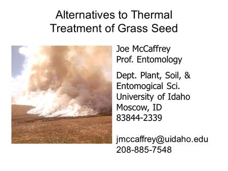 Alternatives to Thermal Treatment of Grass Seed Joe McCaffrey Prof. Entomology Dept. Plant, Soil, & Entomogical Sci. University of Idaho Moscow, ID 83844-2339.