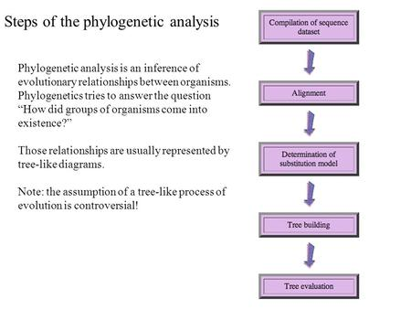 "Phylogenetic analysis is an inference of evolutionary relationships between organisms. Phylogenetics tries to answer the question ""How did groups of organisms."