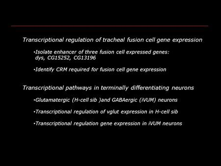 Transcriptional regulation of tracheal fusion cell gene expression Isolate enhancer of three fusion cell expressed genes: dys, CG15252, CG13196 Identify.