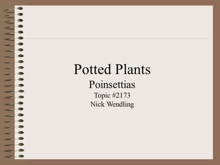 Potted Plants Poinsettias Topic #2173 Nick Wendling.