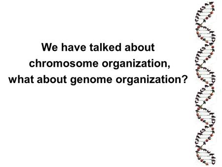 chromosome organization, what about genome organization?
