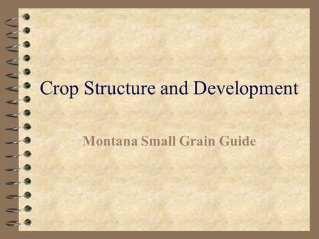 Crop Structure and Development
