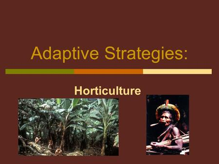 Adaptive Strategies: Horticulture 2 Functional Consequences  Tribes or Chiefdoms  Larger, more stable groups  Sendentary or semi-sendentary villages.