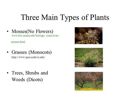Three Main Types of Plants Mosses(No Flowers)  conn.river/ mosses.html Grasses (Monocots)  Trees,