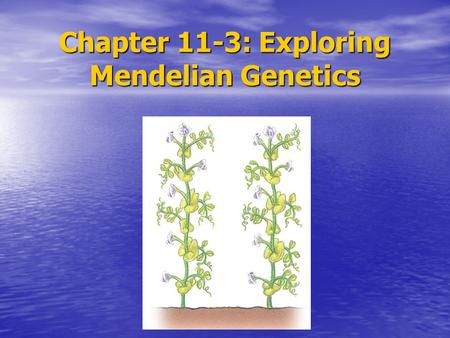 Chapter 11-3: Exploring Mendelian Genetics. To determine if the segregation of one pair of alleles affects the segregation of another pair of alleles,