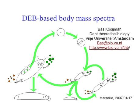 DEB-based body mass spectra Bas Kooijman Dept theoretical biology Vrije Universiteit Amsterdam