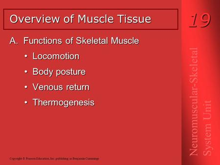 A. Functions of Skeletal Muscle Locomotion Locomotion Body posture Body posture Venous return Venous return Thermogenesis Thermogenesis Overview of Muscle.