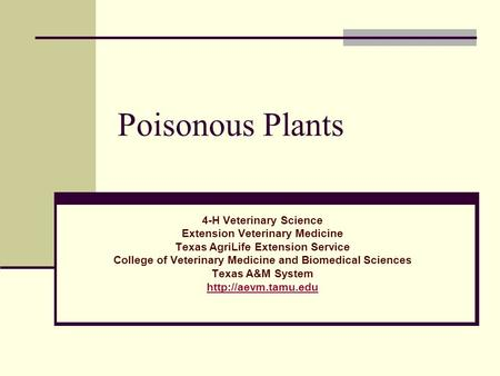 Poisonous Plants 4-H Veterinary Science Extension Veterinary Medicine Texas AgriLife Extension Service College of Veterinary Medicine and Biomedical Sciences.