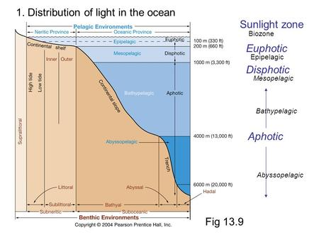 1. Distribution of light in the ocean Sunlight zone