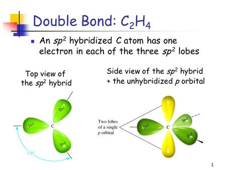 1 Double Bond: C 2 H 4 An sp 2 hybridized C atom has one electron in each of the three sp 2 lobes Top view of the sp 2 hybrid Side view of the sp 2 hybrid.