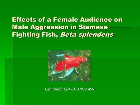 Effects of a Female Audience on Male Aggression in Siamese Fighting Fish, Beta splendens Dan Rauch 12-4-01 ANSC 455.