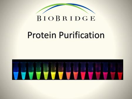 Protein Purification. What do you know about proteins? Why do we need to purify proteins? What are you curious about?