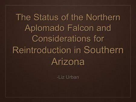 The Status of the Northern Aplomado Falcon and Considerations for Reintroduction in Southern Arizona -Liz Urban.