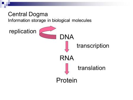 Central Dogma Information storage in biological molecules DNA RNA Protein transcription translation replication.