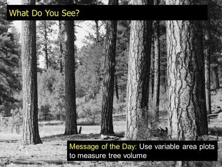 What Do You See? Message of the Day: Use variable area plots to measure tree volume.