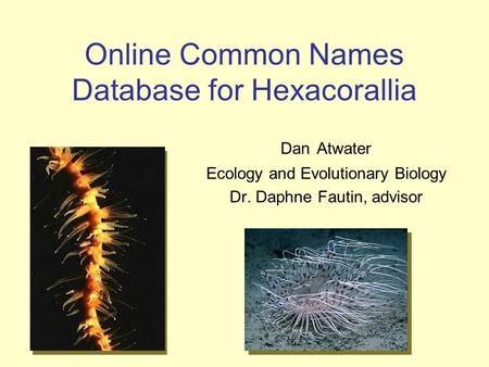 Online Common Names Database for Hexacorallia Dan Atwater Ecology and Evolutionary Biology Dr. Daphne Fautin, advisor.