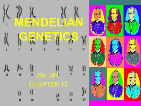 Bio 391 CHAPTER 13 MENDELIAN GENETICS. DNA vocabulary there are 4 chromatids in a tetrad.