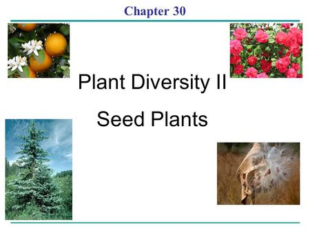 Chapter 30 Plant Diversity II Seed Plants. Evolution of Seed Plants (angiosperms and gymnosperms) Seeds changed the course of plant evolution – Enabling.