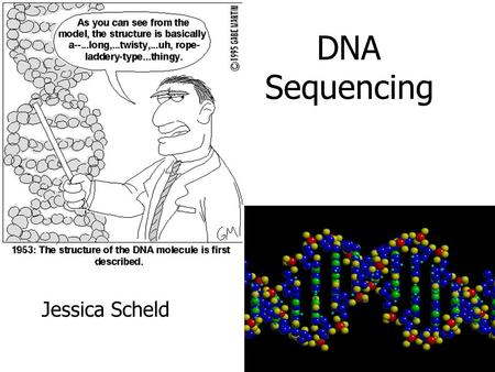 DNA Sequencing Jessica Scheld. Recall: DNA Polymer of nucleotides which encodes information Made up of long sequences of A,T,C,G's We want to read the.