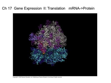 Ch 17  Gene Expression II: Translation   mRNA->Protein