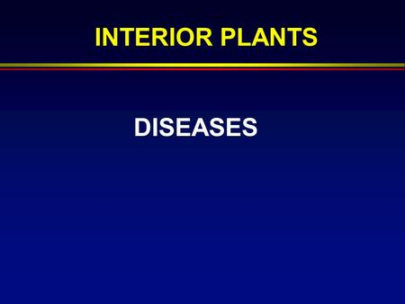 DISEASES INTERIOR PLANTS. Disease Definition  Disease- abnormality in structure or function caused by an infectious agent that injures or destroys 