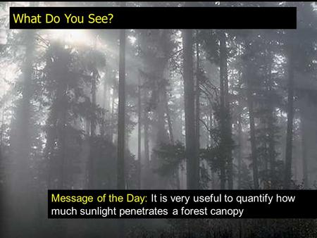 What Do You See? Message of the Day: It is very useful to quantify how much sunlight penetrates a forest canopy.