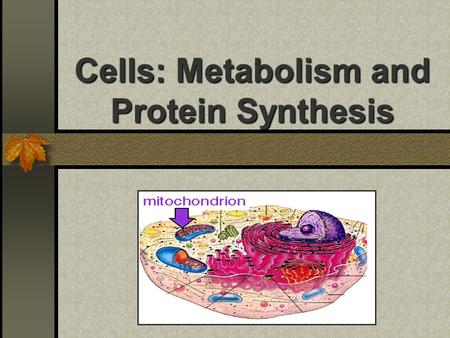 Cells: Metabolism and Protein Synthesis. Mitochondria: Cell Power Energy => Work O2 required to completely capture food energy into ATP Small amounts.