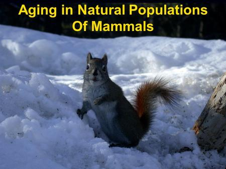 Aging in Natural Populations Of Mammals. Why and how do mammals get old and die? How is this affected by: a. Reproduction b. Natural Stressors (competition,
