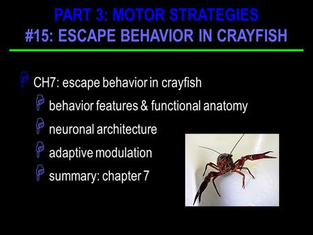 H CH7: escape behavior in crayfish H behavior features & functional anatomy H neuronal architecture H adaptive modulation H summary: chapter 7 PART 3: