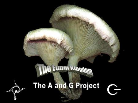 Fungi By: The A and G project. Social Role of Mushrooms People use mushrooms in many different ways, they eat them and plant them and some grow in the.
