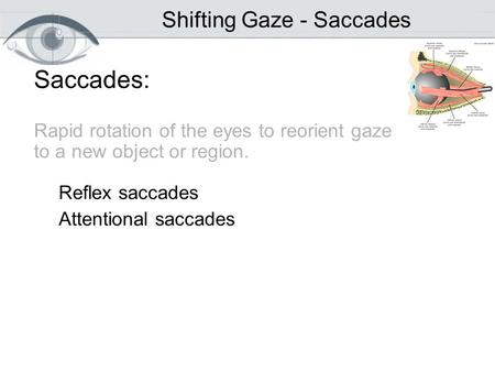 Saccades: Rapid rotation of the eyes to reorient gaze to a new object or region. Reflex saccades Attentional saccades Shifting Gaze - Saccades.
