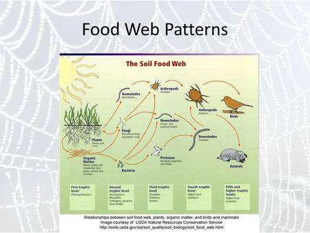 Food Web Patterns. Food Webs: explanations Explanations for food webs draw heavily on two kinds of models: dynamic models base on extensions of the Lotka-Volterra.