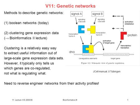 11. Lecture WS 2005/06Bioinformatics III1 V11: Genetic networks Methods to describe genetic networks: (1) boolean networks (today) (2) clustering gene.