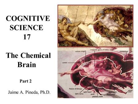 COGNITIVE SCIENCE 17 The Chemical Brain Part 2 Jaime A. Pineda, Ph.D.