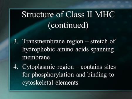 Structure of Class II MHC (continued) 3.Transmembrane region – stretch of hydrophobic amino acids spanning membrane 4.Cytoplasmic region – contains sites.