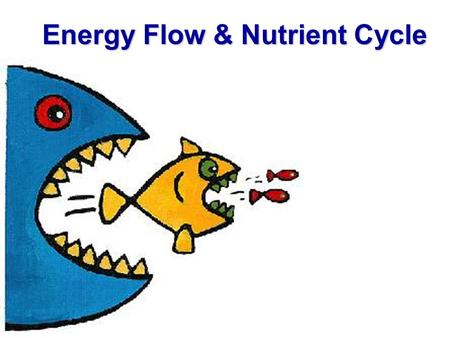 Energy Flow & Nutrient Cycle. Food Chains Artificial devices to illustrate energy flow from one trophic level to another Trophic Levels: groups of organisms.