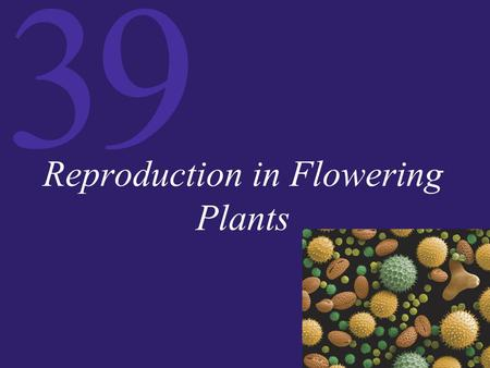 39 Reproduction in Flowering Plants. 39 Sexual Reproduction in Plants Flowers contain the sex organs of plants. They have four groups of organs: carpels,