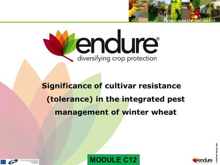 © ENDURE, February 2007 FOOD QUALITY AND SAFETY © ENDURE, February 2007 FOOD QUALITY AND SAFETY Significance of cultivar resistance (tolerance) in the.