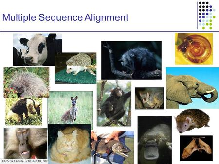CS273a Lecture 9/10, Aut 10, Batzoglou Multiple Sequence Alignment.