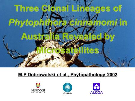 Three Clonal Lineages of Phytophthora cinnamomi in Australia Revealed by Microsatellites M.P Dobrowolski et al., Phytopathology 2002.