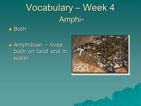 Vocabulary – Week 4 Amphi -  Both  Amphibian – lives both on land and in water.